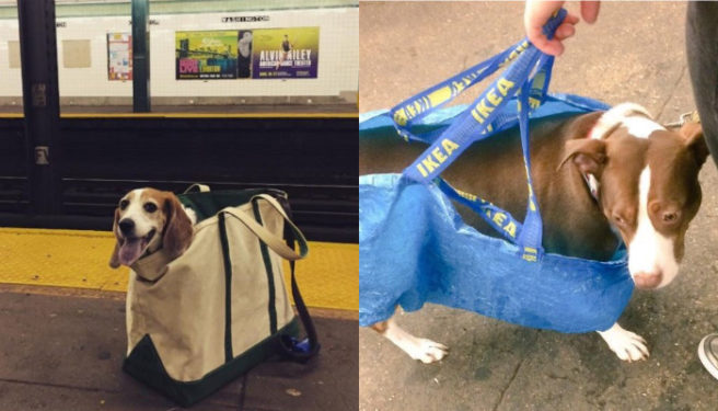 The Subway Banned Dogs And The People Of Nyc Did Not